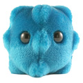 Giant Microbes®